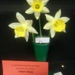 'Topolino' Winner of the class for three intermediate blooms Exhibitor Sue Vinden