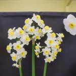 3 blooms Division 8 Sue Vinden: Avalanche