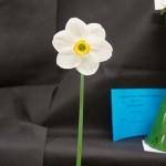 One Cultivar, Division 9. John Freer: Blisland