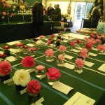 The Camellia show Photo Wendy Akers