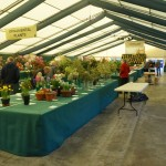 Staging the Ornamental Plants -