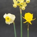 Various Best Miniature Vase Keith Blundell