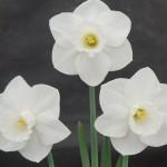 'Shelagh Rowan' Best Vase 66-75 Steve Ryan