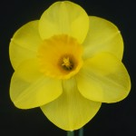 Best Bloom in show Derek Phillips Banker
