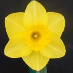 Best Bloom Div 1 Derek Phillips Ombersley