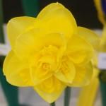 Best Bloom Div 4 Derek Phillips Tasgem