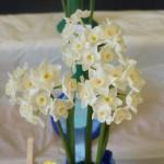 Best Bloom/Vase Evelyn Jane N. tazetta orientalis
