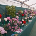 Magnolias etc in show tent