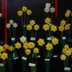 3 Blooms Div 2 Winner bottom row Third vase from left