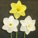 1 bloom Div 1,2,3 Whisky Mac Park Springs Pebble Mill