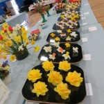A different way to show your daffodils