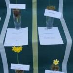 3 Miniature Cultivars 1 Brian Duncan (L) 2 Anne Wright (R)