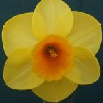 Best Bloom 'Banker' John Goddard